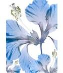 HIBISCUS ROSA SINENSIS A3 blue
