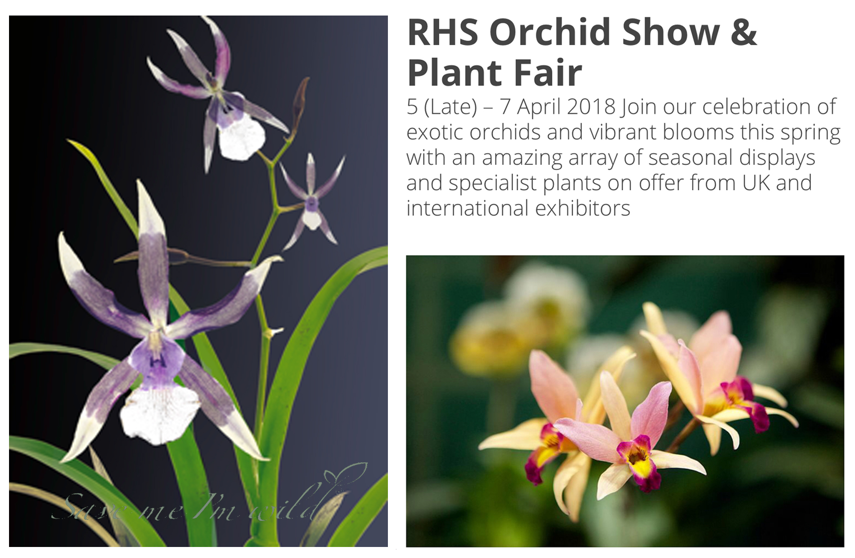 RHS Orchid Show
